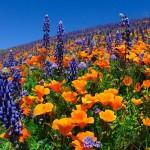 Единение с природой — вот настоящая «инъекция» Красоты!