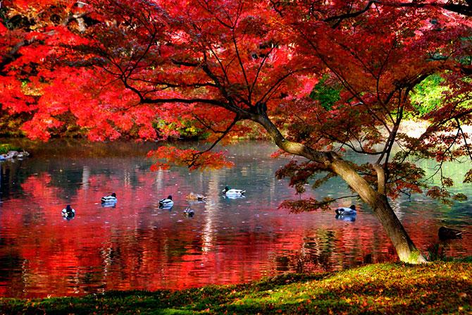 1349696854_fall-in-kioto-18