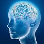 Нейропластичность. Мы можем меняться — это научно доказано
