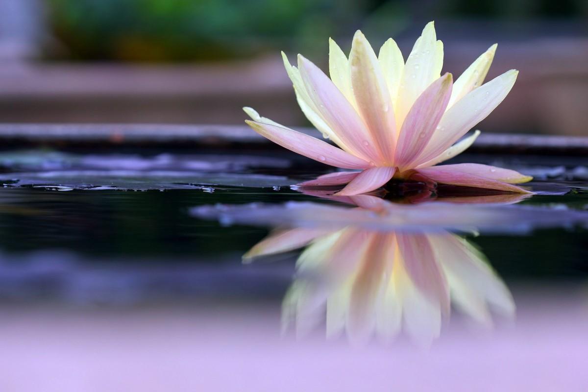 практики медитации