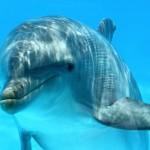 Дельфины и их чудесное сознание