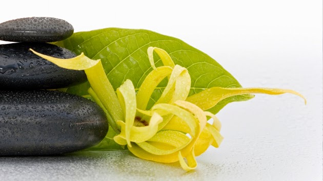 Article image Ylang Ylang816-153591