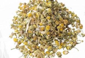 Matricaria-chamomilla-6