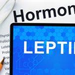 7 важных фактов о «гормоне сытости» лептине