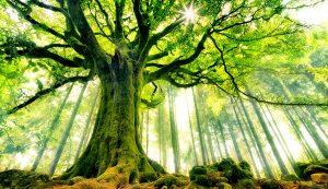 beautiful-strange-tree-wide