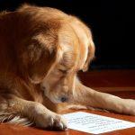 Собаки понимают не только интонации, но и смысл слов!