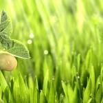 Как увеличить биодоступность продуктов, или новая стратегия здоровья